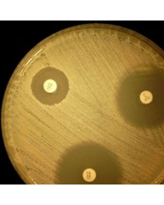 Media - Mueller-Hinton Agar