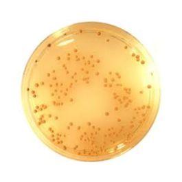 />Bio-Plex Multiplex Immunoassay