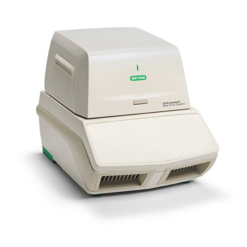 />Real Time PCR Detection