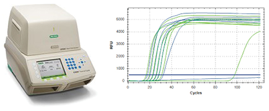 REAL-TIME PCR